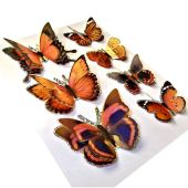 3D Butterfly Stickers from MinistryGallery.com